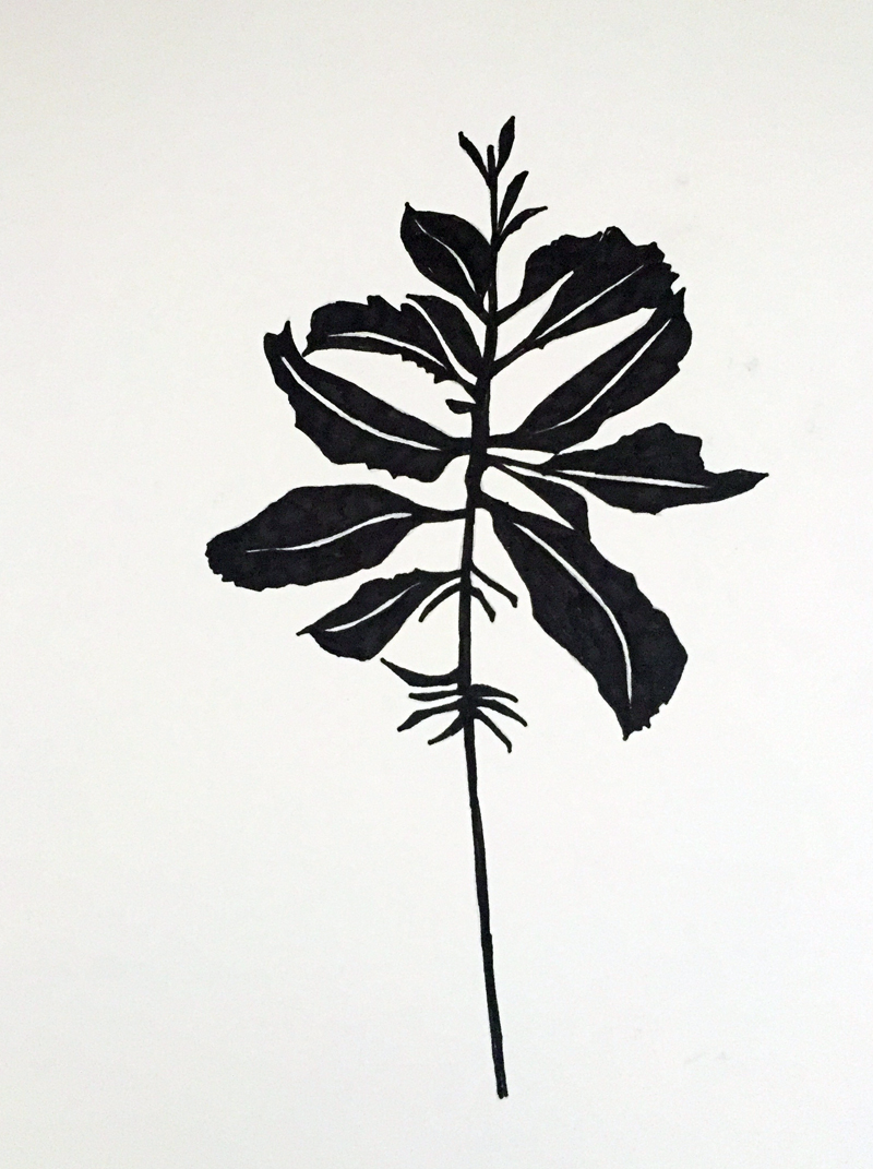 clairebrewster_drawing_plant3