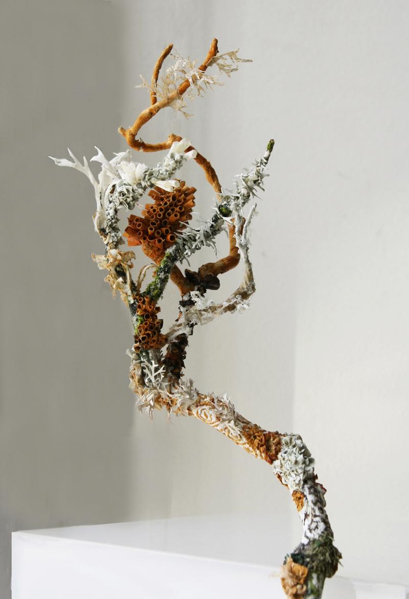 Laura Youngston Coll Untitled(Lichen)