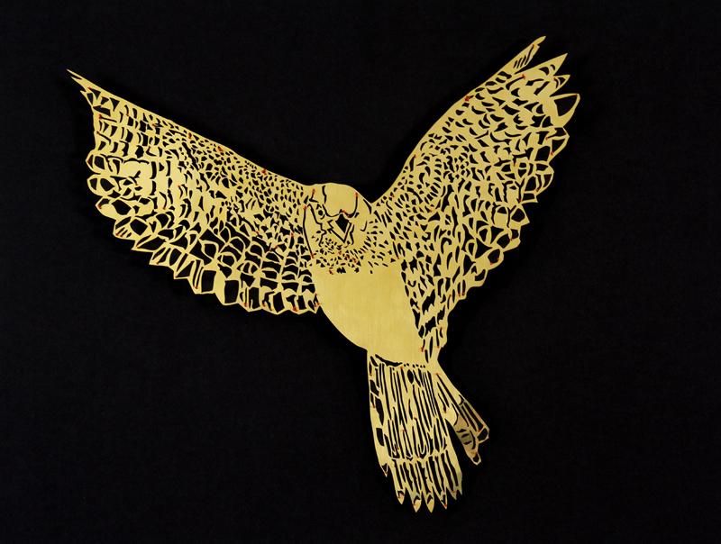 clairebrewstr_sparrowhawk